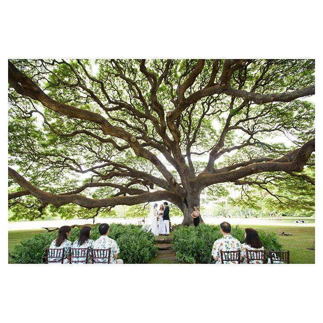.大樹のパワーを肌で感じて...@moanaluagardenswedding .Produced by @la.chic.weddings