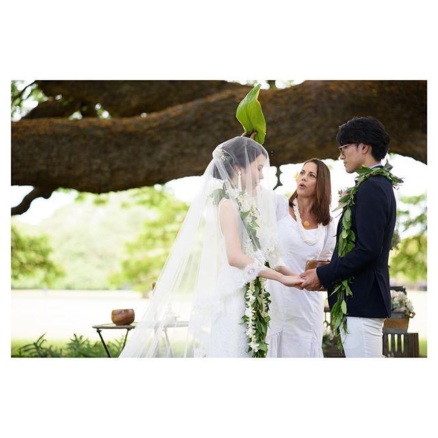 .ハワイアンブレッシング@moanaluagardenswedding .ハワイの大地に愛を誓う。きっと今まで以上にハワイが特別な場所になる。.. @tmj_photo  @hisami_hairmake Produced by @la.chic.weddings